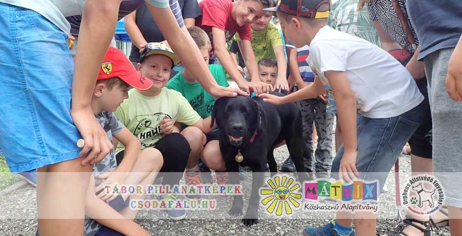 kutyasimogató nyár szabadidő nyári szünet táborozás